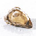 Huîtres Prat-Ar-Coum N°3