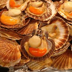 Coquille Saint-Jacques avec corail