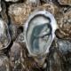 Huîtres Marennes Fine de Claire N°3