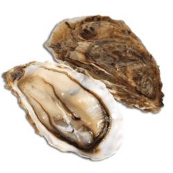 Huîtres de Cancale N°3