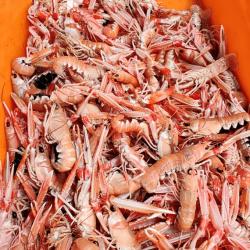 Sardines de St Gilles Croix de Vie