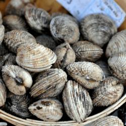 Sardines EXTRA