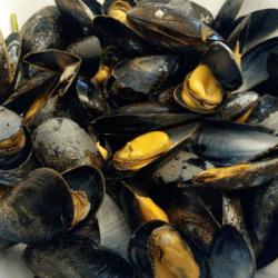 Aromates de la mer